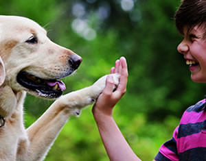 doggy_goo_high_five